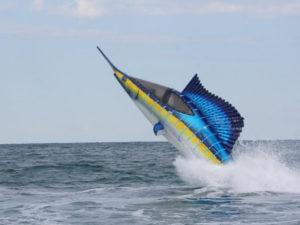 sail fish design sea breecher
